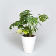 the-sill-case-study-floor-planter-with-monstera-1.jpg